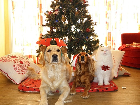 Name A Animal You Might See On A Christmas Card.Gallery Collection Blog